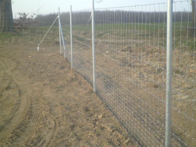 vadháló,drótfonat,kerítés,oszlop